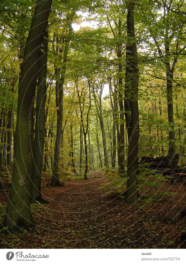 into the forest Forest Tree Autumn Footpath Leaf Clearing Lanes & trails