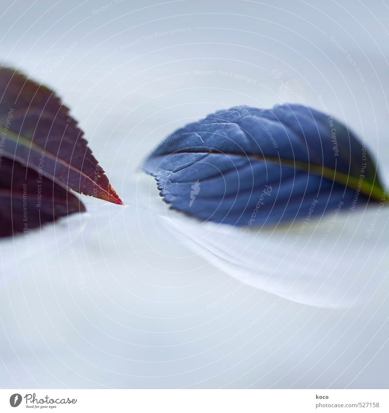 Nature Blue Green White Water Summer Plant Red Leaf Love Autumn Spring Natural Lie Dream Glittering