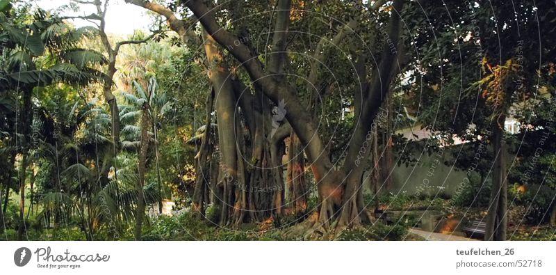 A park in Lisbon Park Tree Virgin forest Forest