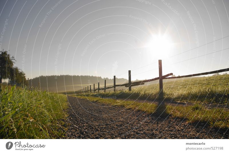 mornin Environment Nature Landscape Earth Air Drops of water Cloudless sky Autumn Weather Beautiful weather Fog Tree Grass Bushes Pasture fence Footpath Stone