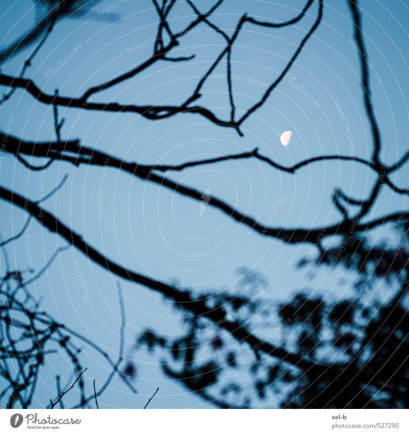 look up Night life Nature Elements Air Sky Cloudless sky Night sky Moon Autumn Winter Tree Garden Park Observe Discover Illuminate Looking Dream Dark