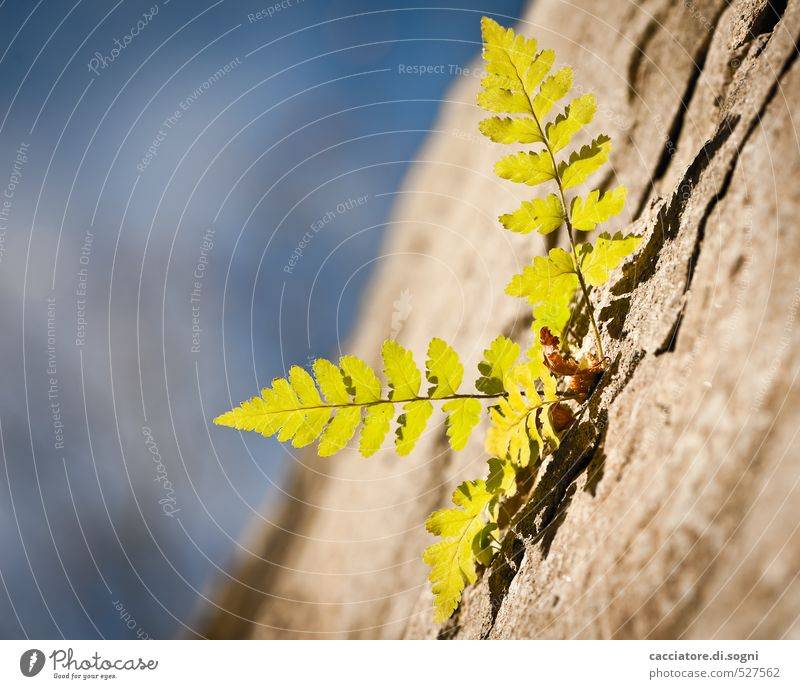 Sky Blue Green Plant Loneliness Environment Wall (building) Autumn Wall (barrier) Freedom Small Happy Natural Brown Power Success