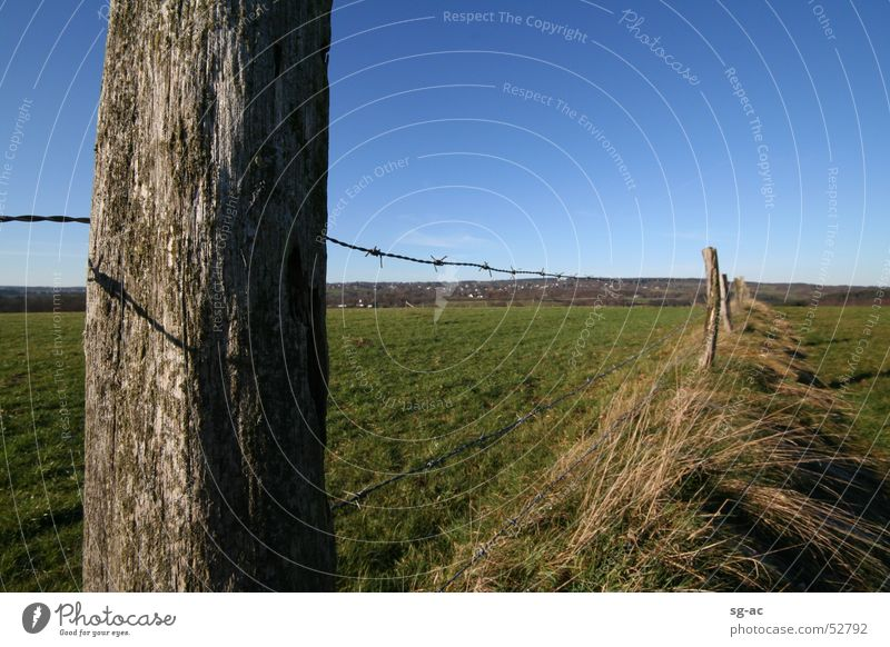 fence post Eifel Meadow Fence Barbed wire Grass Livestock Highlands Blue sky Pasture Pasture fence Wood Green