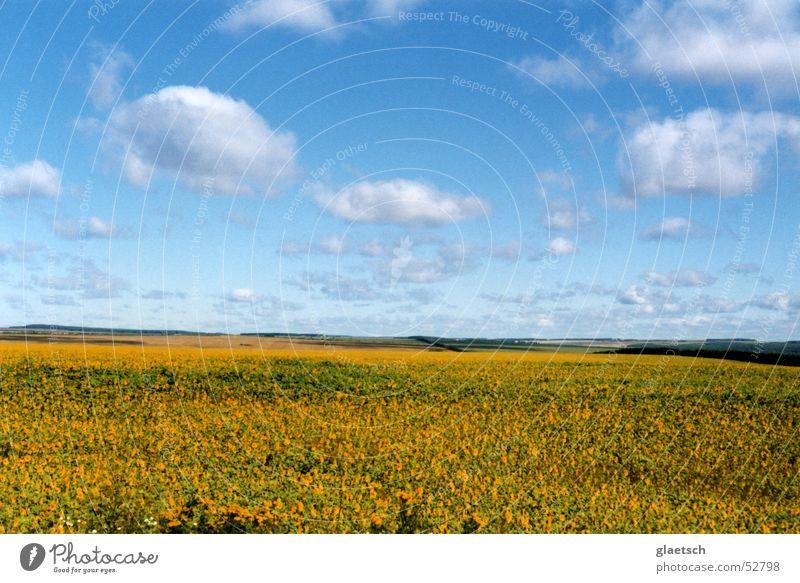 flower meadow Clouds Meadow Flower Horizon Sky Blue