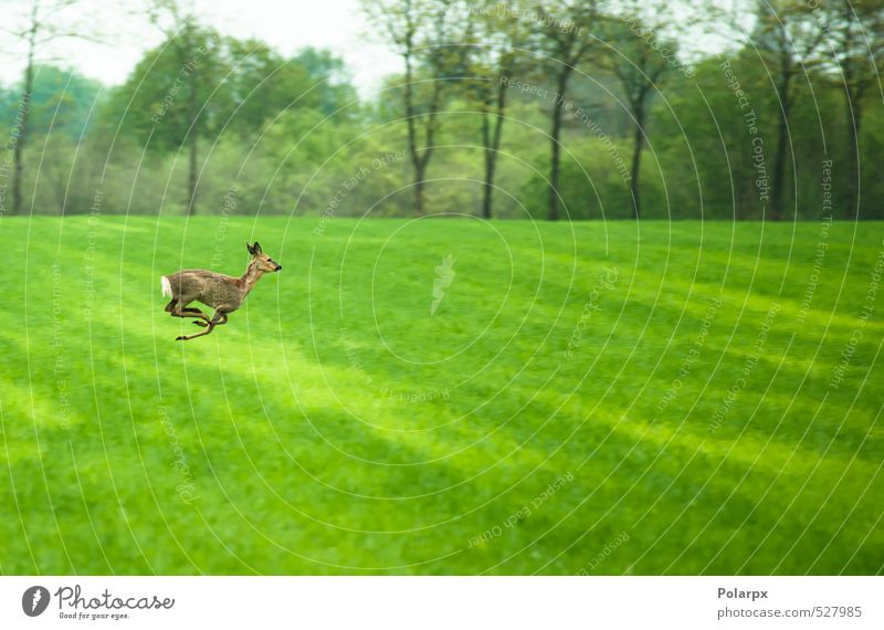 Deer on the run Sky Nature Green Summer Landscape Animal Forest Life Meadow Grass Eating Jump Brown Park Wild Free