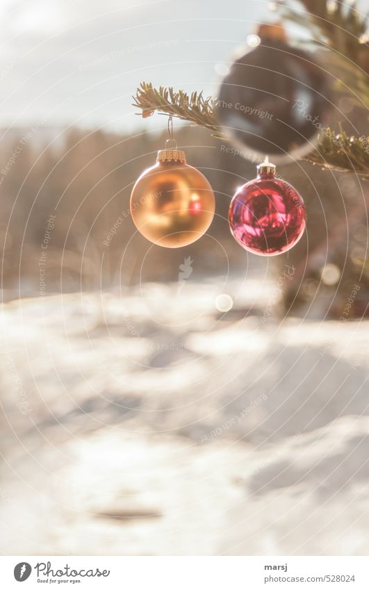 Nature Christmas & Advent Red Relaxation Landscape Winter Happy Feasts & Celebrations Moody Glittering Gold Living or residing Illuminate Beautiful weather Decoration Happiness