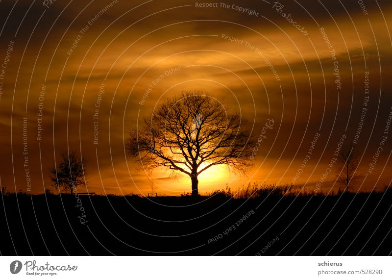 Sky Nature Plant Sun Tree Landscape Calm Winter Environment Emotions Autumn Moody Field Contentment Beautiful weather Future
