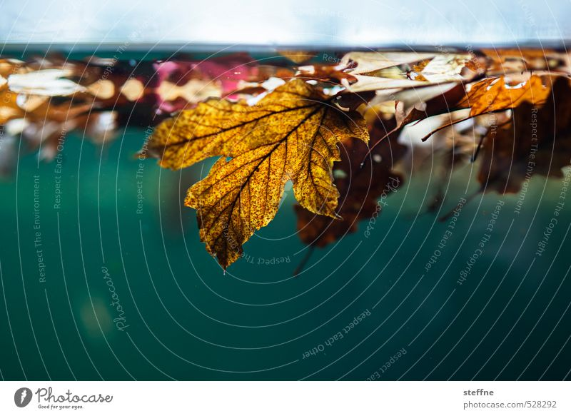 On current occasion Autumn Weather Rain Leaf Beautiful Wet Autumn leaves Autumnal Autumnal colours Autumnal weather Colour photo Underwater photo