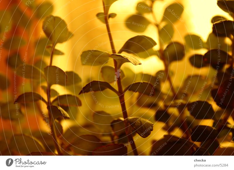 plant Plant Macro (Extreme close-up) Gold Beautiful weather Sun atmosphere