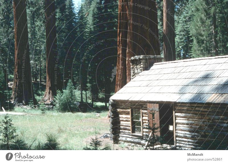 Yosemite Tree Forest House (Residential Structure) Wooden house Yosemite National Park California USA Power Force Giant tree giant trees woods seqoias