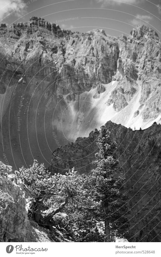 Nature Vacation & Travel Tree Landscape Environment Mountain Gray Natural Rock Wild Tourism Hiking Trip Esthetic Peak Alps