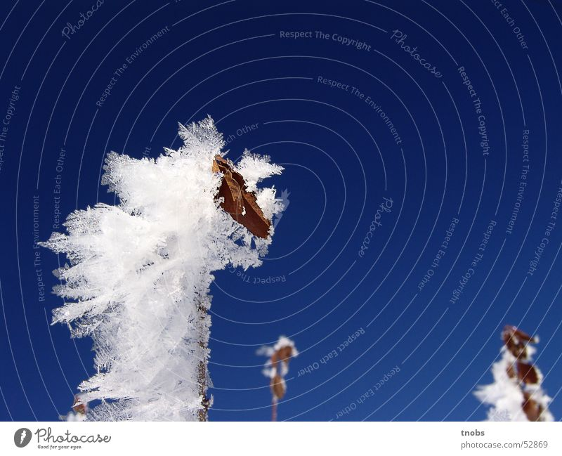Nature Flower Winter Cold Snow Landscape Ice Frost Snowscape