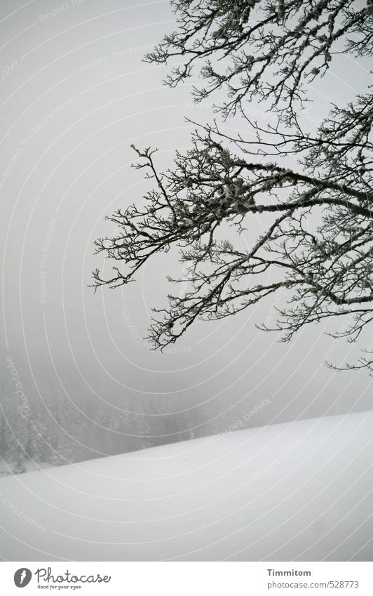 Nature White Plant Tree Landscape Winter Black Forest Snow Gray Natural Fog Branch Hill Bleak Bad weather