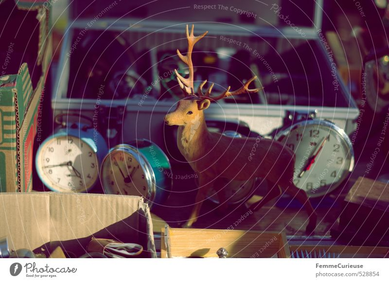 Animal Clock Decoration Shopping Eternity Kitsch Search Illuminate Still Life Figure Cardboard Antlers Suitcase Crate Sell Stagnating