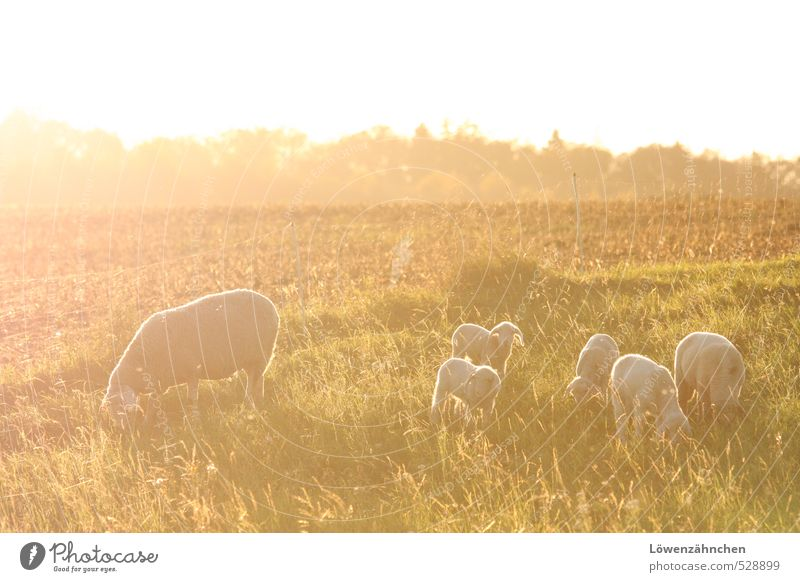 Nature Beautiful Green White Landscape Calm Yellow Baby animal Life Bright Moody Field Gold Idyll Illuminate Happiness