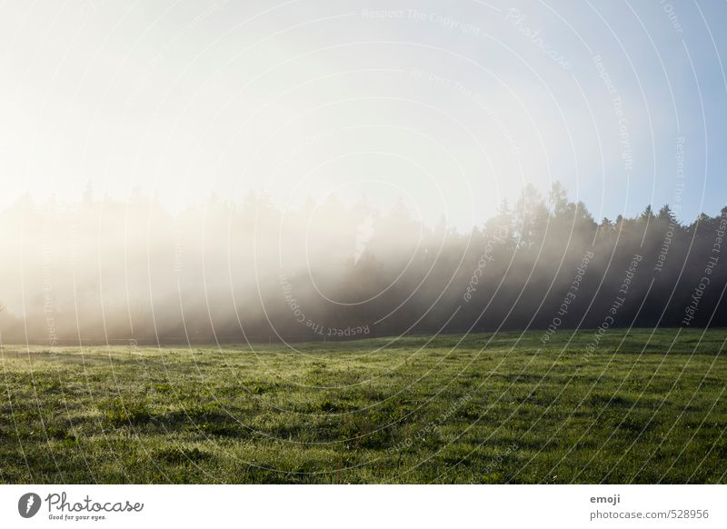 veil of mist Environment Nature Landscape Autumn Beautiful weather Fog Field Cold Natural Colour photo Exterior shot Deserted Copy Space top Morning Day