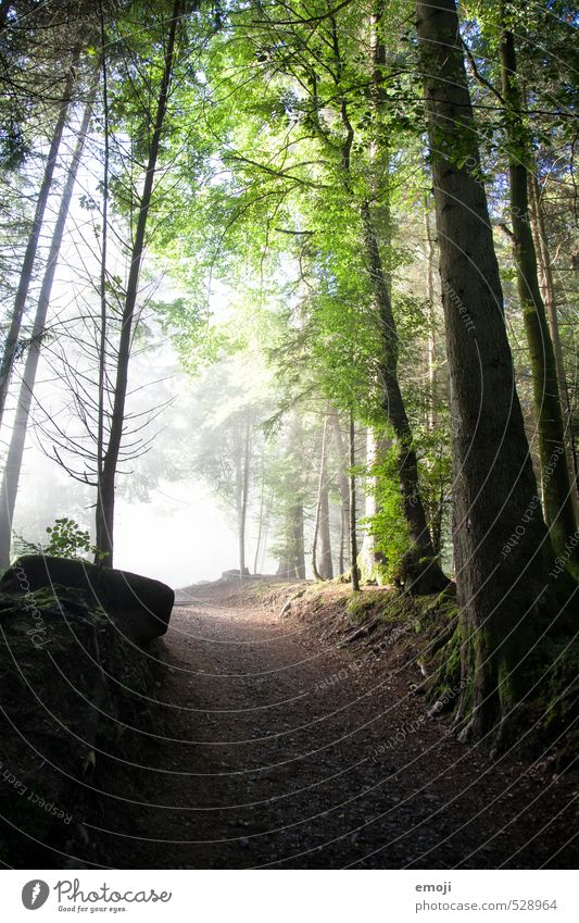 Into the light Environment Nature Landscape Fog Tree Forest Natural Green Colour photo Exterior shot Deserted Day Wide angle