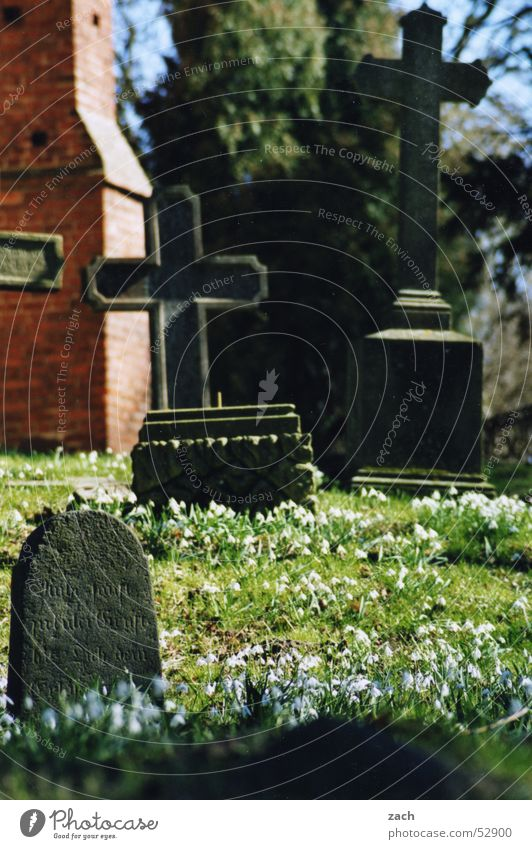 Flower Death Religion and faith Back Transience Grief Peace Distress Cemetery Grave Kill Funeral Tombstone Snowdrop Coffin