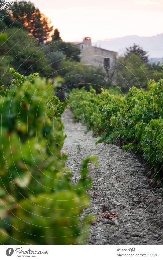 French Style XXXI Art Esthetic Contentment Winery Vine France Provence Vineyard Wine growing Landscape Colour photo Subdued colour Exterior shot Close-up Detail