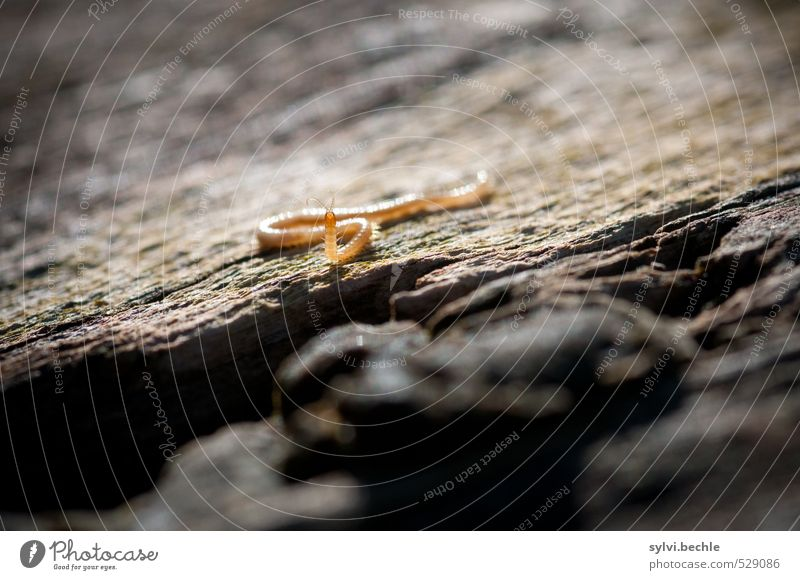 Nature Tree Animal Yellow Environment Movement Small Brown Wild animal Walking Beautiful weather Observe Curiosity Insect Tree trunk Interest