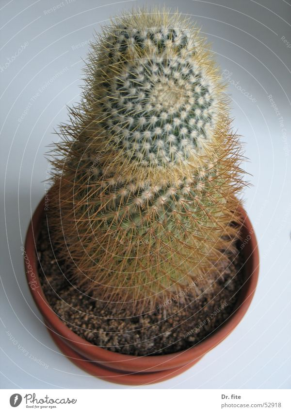 Prickly affair Cactus Plant Green Thorn Pot plant Flowerpot Bird's-eye view Point Living or residing Close-up