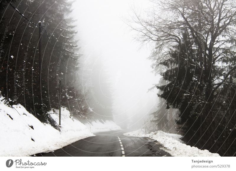 Winter Forest Cold Mountain Street Snow Fog 50 Handle Winding road Speed limit Orientation marks Ground fog