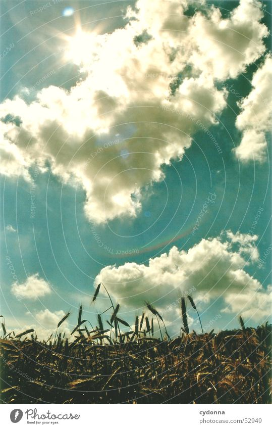 summer breeze Summer Field Clouds Physics Impression Sunbeam Light Celestial bodies and the universe Sky Landscape Warmth