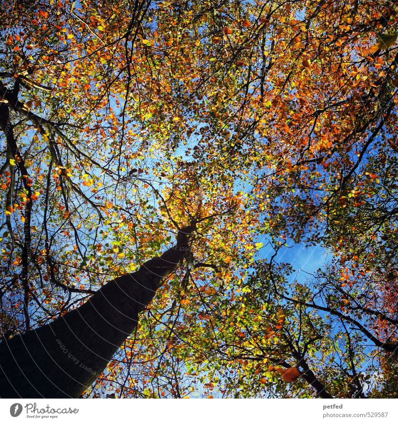 H E R B S T ! Nature Sky Autumn Beautiful weather Tree Leaf Forest Movement To fall Faded To dry up Friendliness Large Sustainability Blue Brown Multicoloured