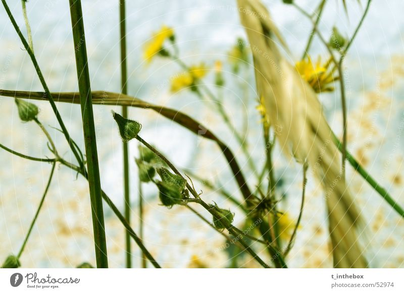 Flowers and Rust Yellow Light Chaos flower blue Contrast strong depth of view dusty lines group small grass