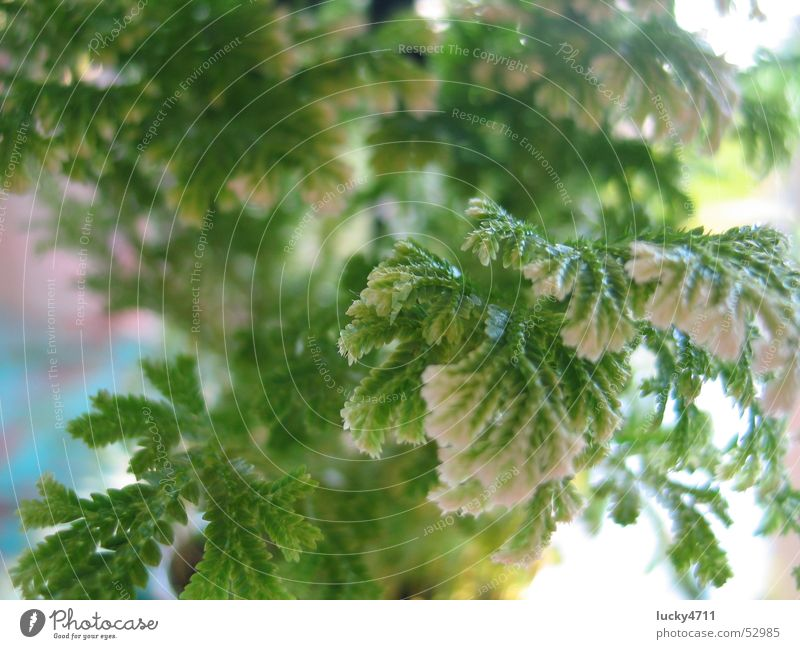Fern to dream about Flower Tree Green Plant Dream Playing Landscape Pteridopsida