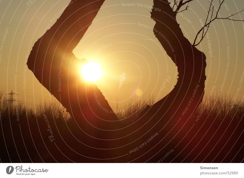 sun game Tree Sunset Warm colour Electricity pylon Tree trunk Forest Footpath Sky Branch Twig