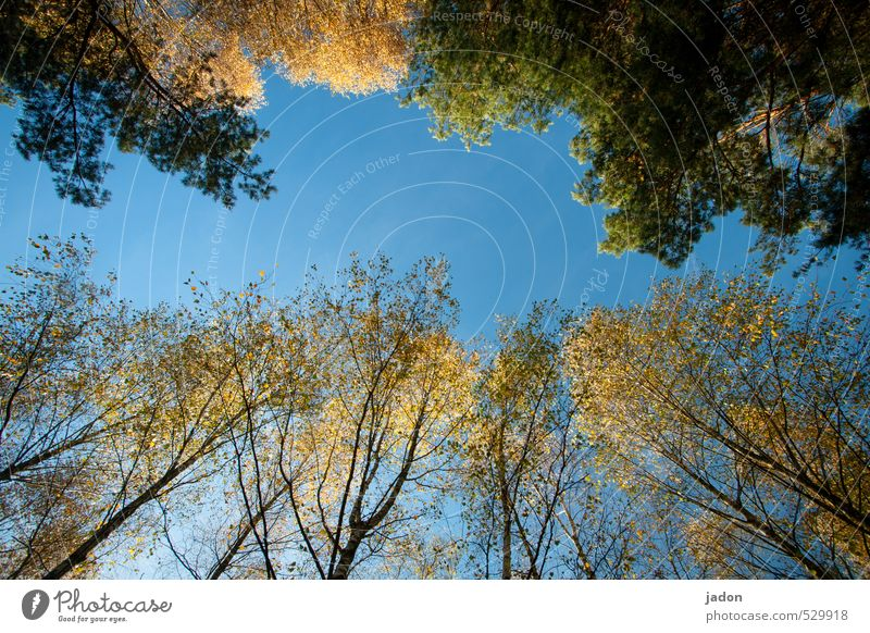Sky Nature Blue Plant Tree Landscape Leaf Forest Autumn Above Elegant Growth Beautiful weather Transience Cloudless sky Limp