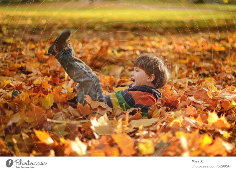 Human being Child Joy Leaf Forest Emotions Autumn Boy (child) Playing Happy Garden Lie Moody Park Leisure and hobbies Infancy