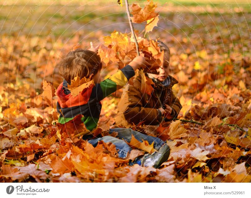 Human being Child Nature Joy Leaf Emotions Autumn Boy (child) Funny Playing Garden Friendship Moody Together Park Masculine