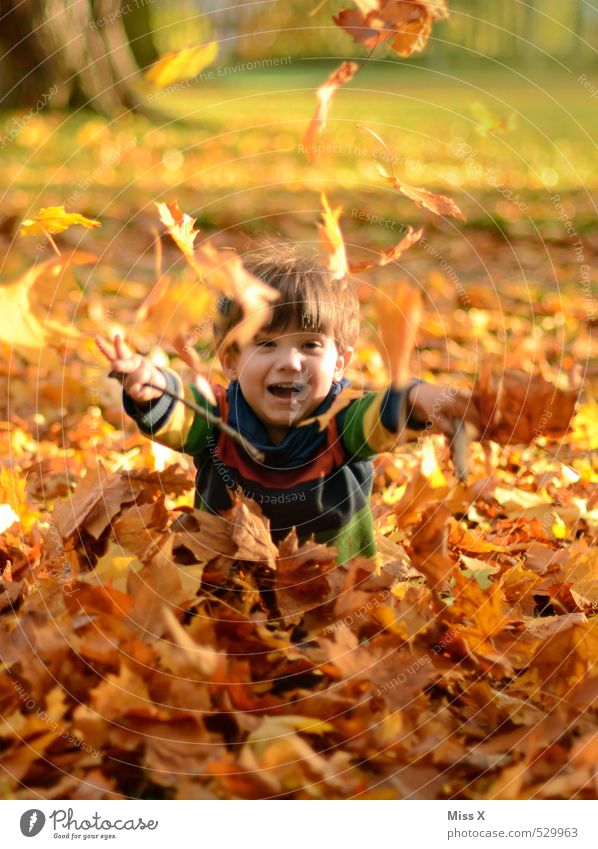 Child in foliage Playing Children's game Human being Toddler Boy (child) Infancy 1 1 - 3 years 3 - 8 years Autumn Tree Leaf Garden Park Forest Laughter Throw