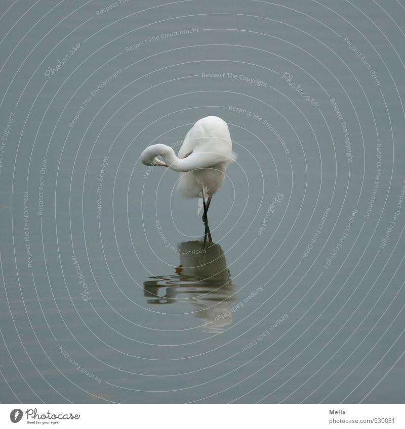 Nature Blue Water Calm Animal Environment Gray Lake Natural Bird Elegant Gloomy Wild animal Stand Cleaning Rotate