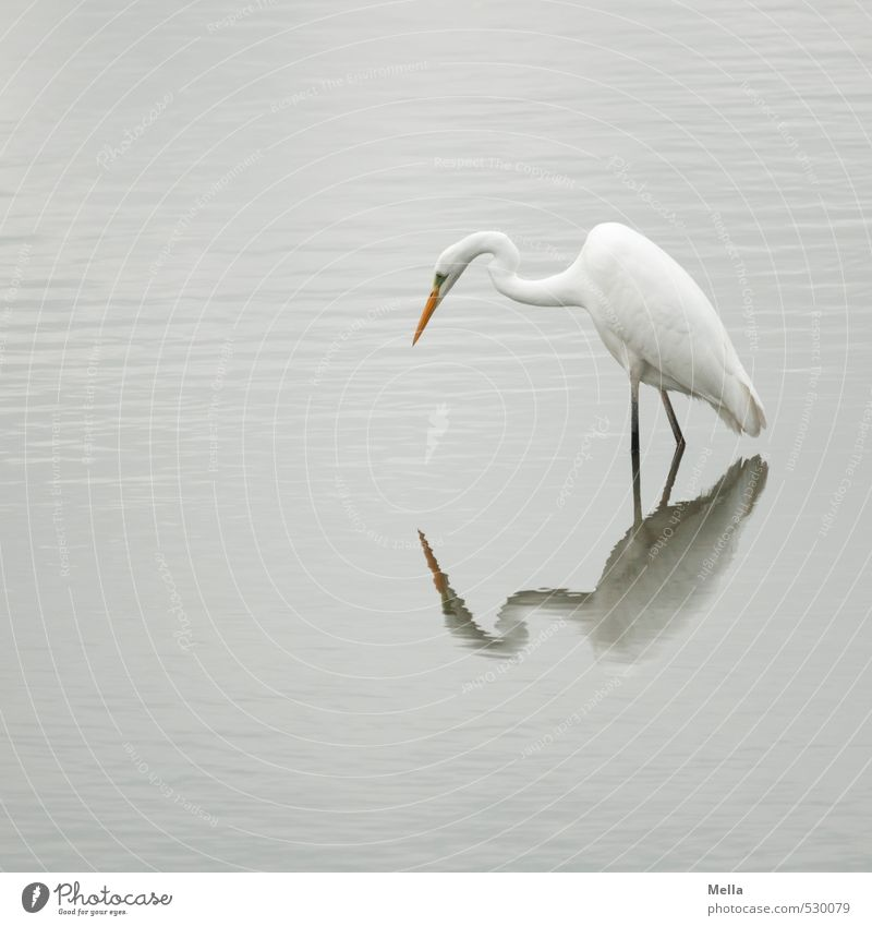 Wat, who are you? Environment Nature Animal Water Pond Lake Wild animal Bird Heron Great egret 1 Observe Looking Stand Free Natural Gloomy Gray Calm Wader