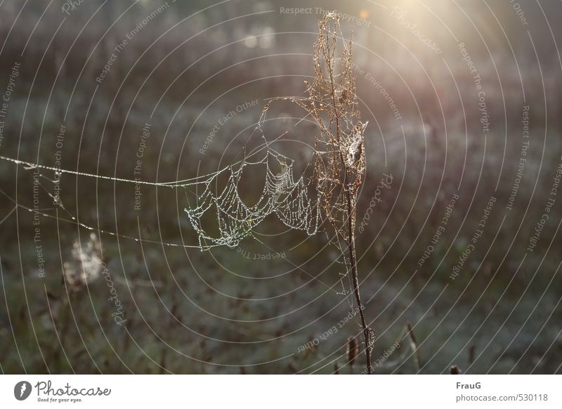 Nature Plant Sun Meadow Autumn Esthetic Drops of water Net Dew Spider's web Delicate Flare Wild plant