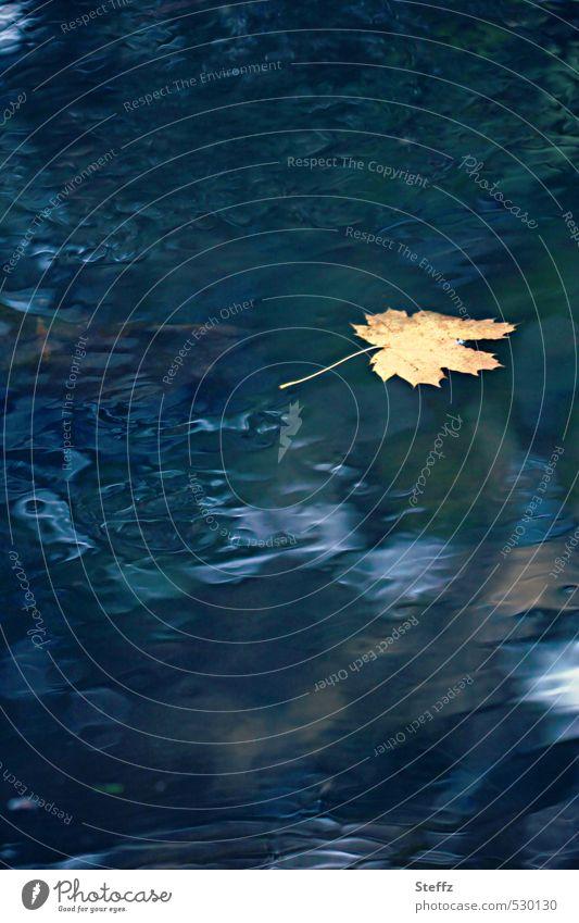 atmospheric November picture yellow maple leaf resignation Longing Meaning drift Loneliness November blues Nostalgia melancholy Maple leaf November mood Sadness