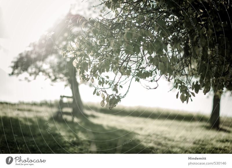 late summer green Landscape Summer Autumn Beautiful weather Plant Tree Leaf Meadow Field Hill Stand Illuminate Growth Infinity Cliche Warmth Gray Green Happy