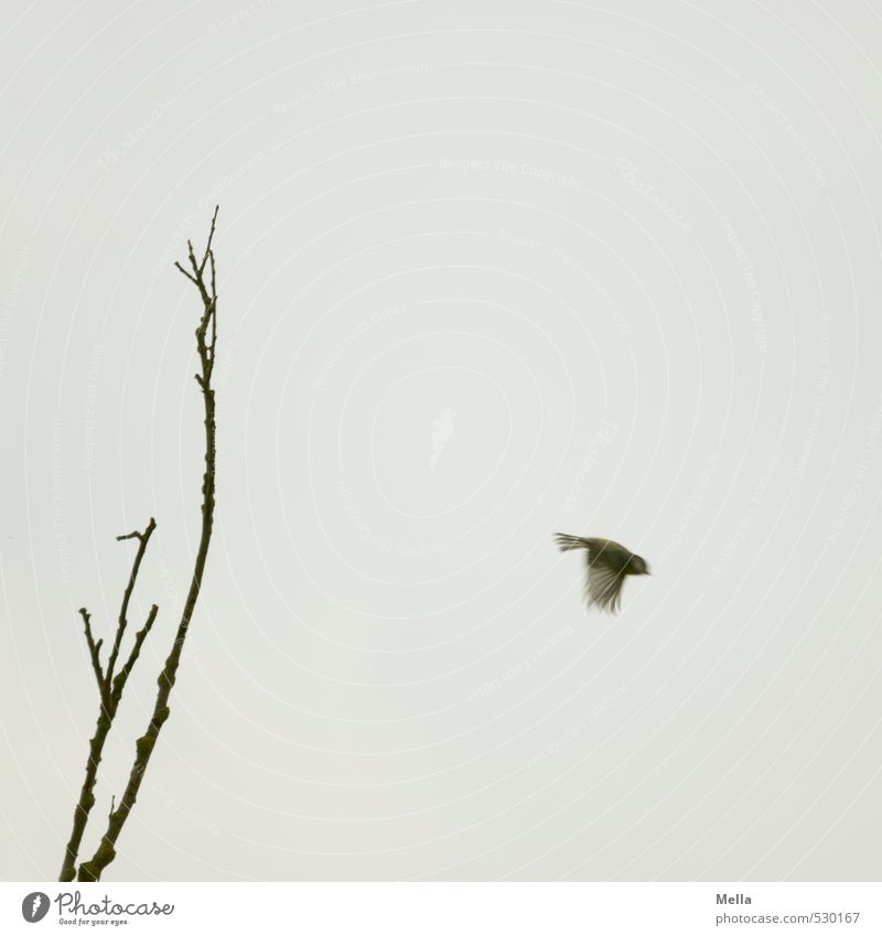 Fly! Environment Nature Air Plant Tree Branch Animal Wild animal Bird Tit mouse 1 Movement Flying Small Natural Gloomy Gray Freedom Dreary Individual