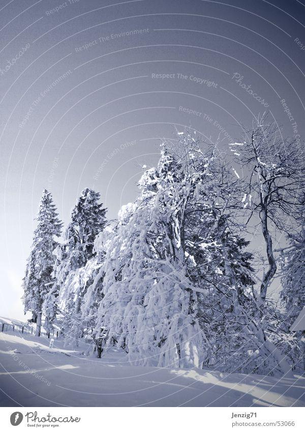 White Tree Winter Cold Frost Monochrome Thuringia Thueringer Wald