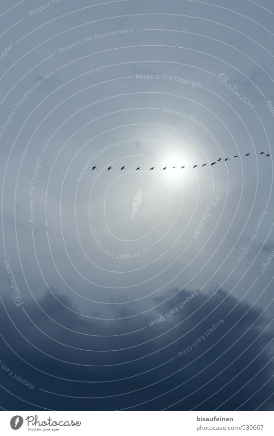Sky Nature Vacation & Travel Blue Sun Clouds Animal Far-off places Autumn Gray Freedom Flying Bird Hiking Trip