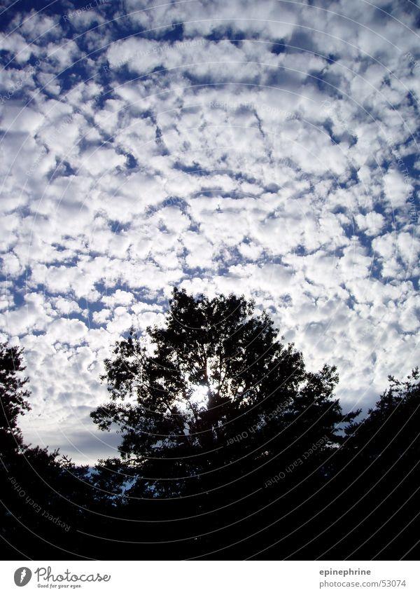 Sky Tree Clouds