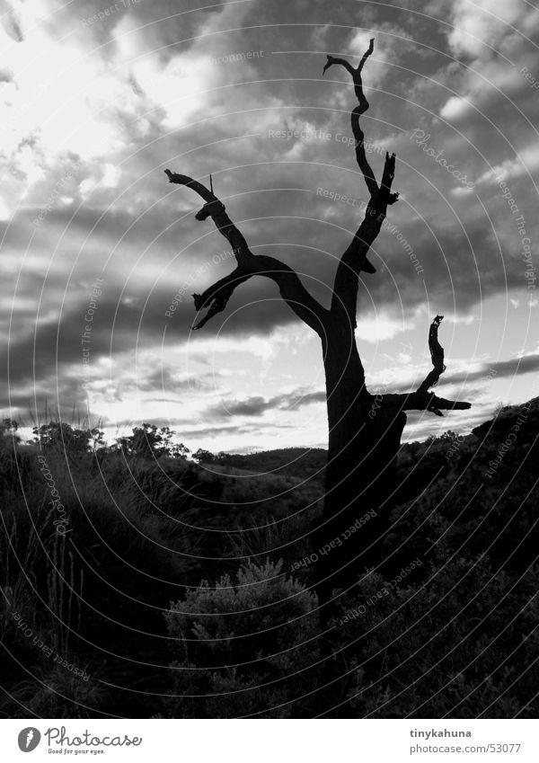 dead life Threat Dark Tree Brittle Death Clouds Deep Karijini Nationalpark Silhouette Sky Old Thin Nature Black & white photo bw Landscape