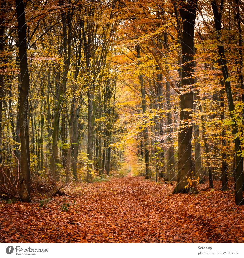 Autumn path Nature Landscape Plant Earth Tree Forest Lanes & trails Moody Caution Serene Calm Colour Colour photo Exterior shot Deserted Day Central perspective