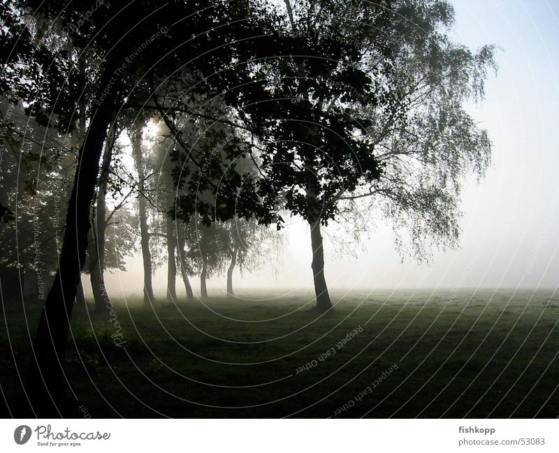 morning fog Fog Fantastic landscape Morning fog Tree Meadow Field Patch of fog Style Calm Dawn foggrass Peaceful