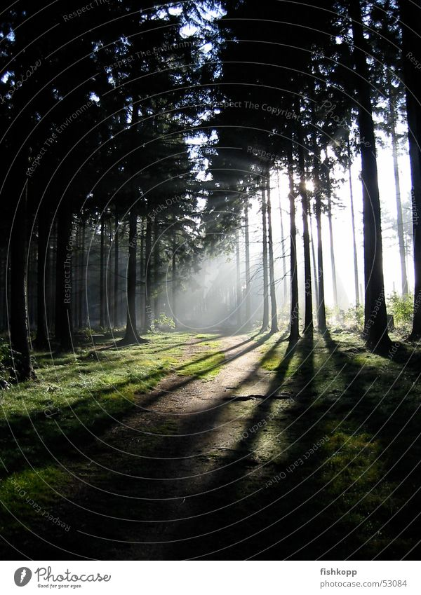 incidence of light Forest Shaft of light Clearing Sunbeam Footpath Enchanted forest Calm Forest walk Energy industry