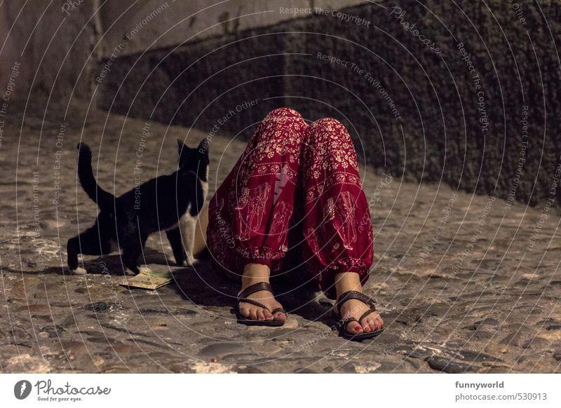 Cat Human being Woman Summer Red Animal Dark Adults Legs Feet Together Friendship Sleep Pants Cobblestones Alcoholic drinks