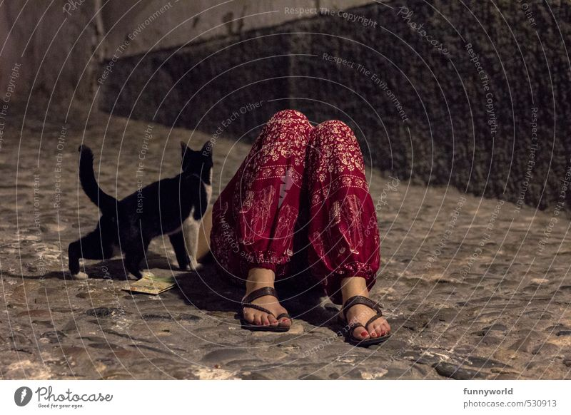 une chatte andalou Woman Adults Legs Feet 1 Human being Pants Sandal Cat Animal Cobblestones Sleep Dark Red Friendship Together Love of animals Hung-over Corpse